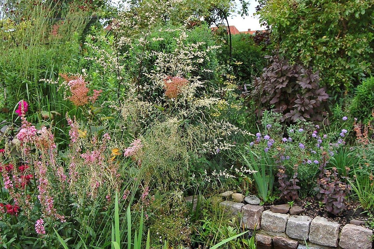 Garten Janssen garten janssen wilhelmshaven het tuinpad op in nachbars garten